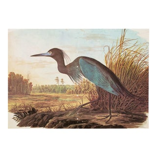 1960s Cottage Style Lithograph of a Blue Heron by John James Audubon