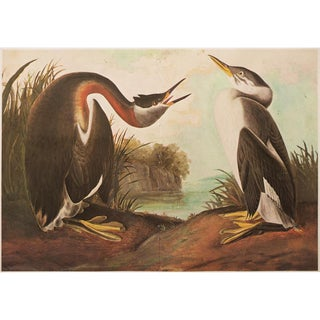 1966 Birds of America Lithograph by Audubon For Sale