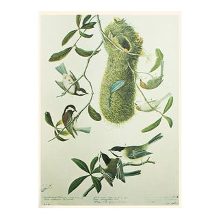 Chestnut-Backed Titmouse by John James Audubon, Vintage Cottage Print For Sale