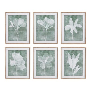 Translucent Floral Prints - Set of 6 from Kenneth Ludwig Chicago For Sale