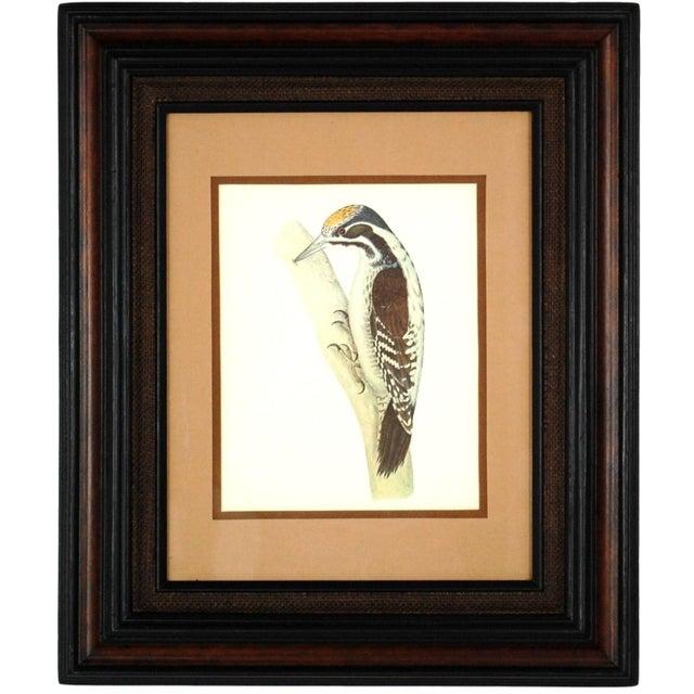 Vintage Framed Bird Prints - Set of 3 - Image 4 of 10