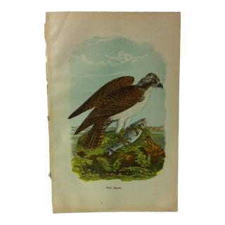 """Vintage Birds of Water Color Print, """"Fish Hawk"""", Circa 1930 For Sale"""