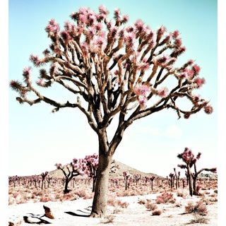 Contemporary 'Pastel Desert – California' Photography by Kristin Hart, 50x50 For Sale