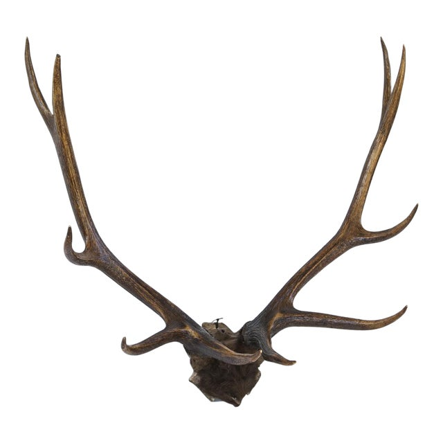 10-Point Elk Antlers - Image 1 of 4