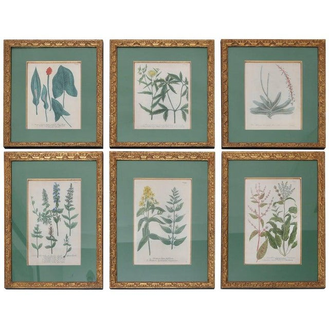 Antique 18th Century Botanical Prints Hand-Colored Engravings - a Set of 6 For Sale - Image 11 of 12