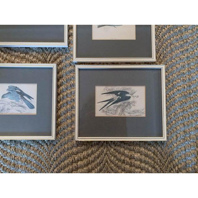 Set of 6 1840's Bird Engravings - Framed For Sale - Image 10 of 11