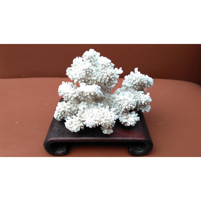 Natural Coral Specimen on Asian Style Curved Wood Stand - Image 2 of 3