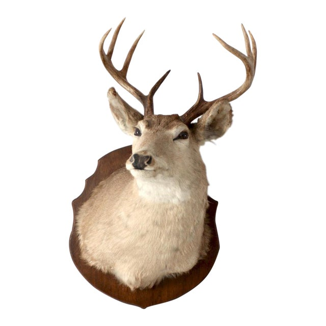 Antique Deer Mount For Sale