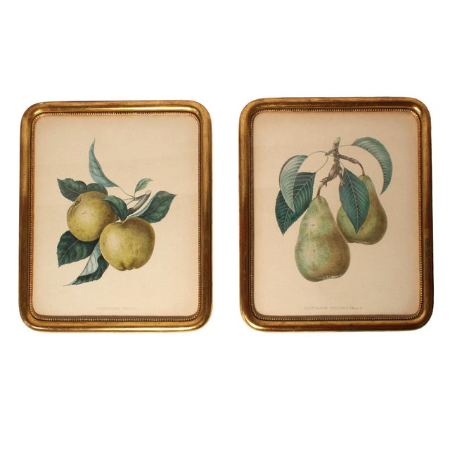 Wood Antique French Apple & Pear Prints Framed in Gilt Wood - Pair For Sale - Image 7 of 7