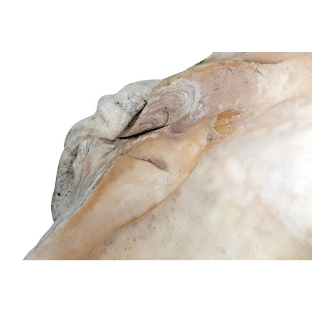 Giant South Pacific Clam Shell - Image 6 of 7
