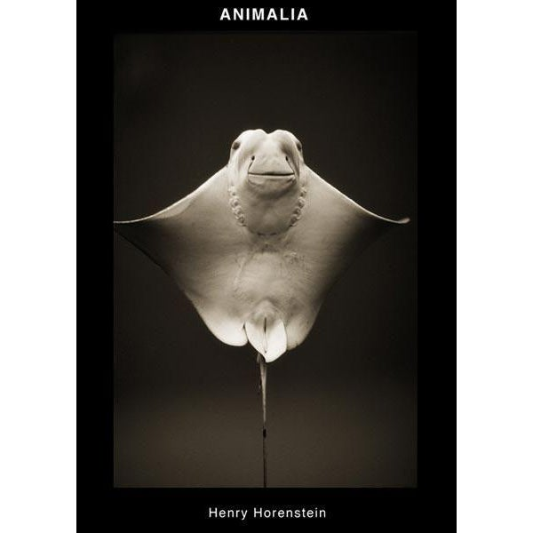 Beluga Whale–Delphinapterus leucas by Henry Horenstein limited edition signed and numbered framed print from his Animalia...