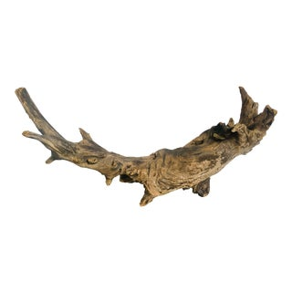 """Large 24.5"""" Natural Free-Form Driftwood For Sale"""