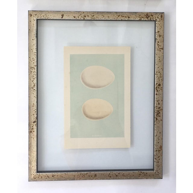 Contemporary Framed Antique Morris Egg Prints - Set of 4 For Sale - Image 3 of 11