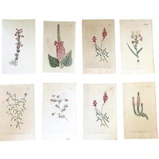 19th-Century Botanical Prints - Set of 8 For Sale