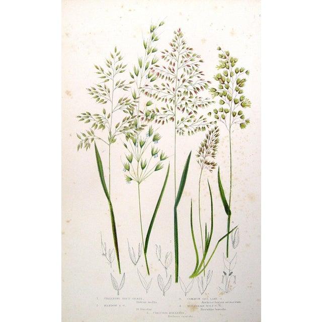Antique 1860 Botanical Grasses Lithographs - A Pair - Image 3 of 4