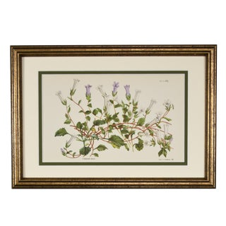 1957 Vintage English Botanical Floral Print, Framed For Sale
