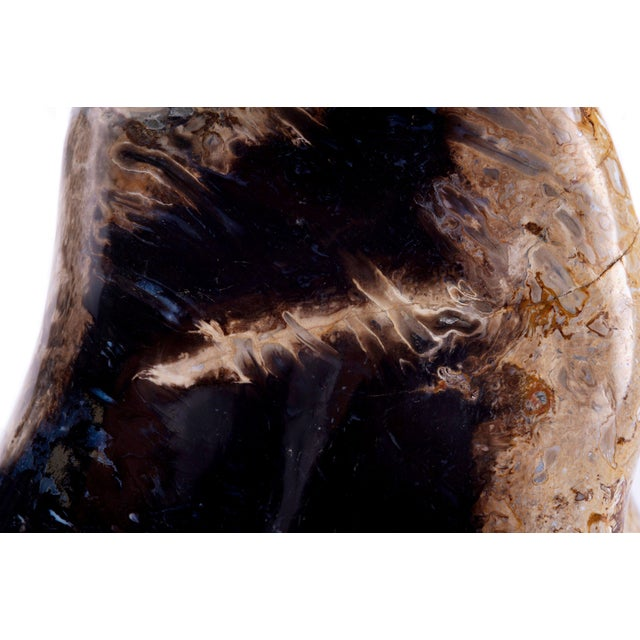 Contemporary Petrified Palm Root For Sale - Image 3 of 5