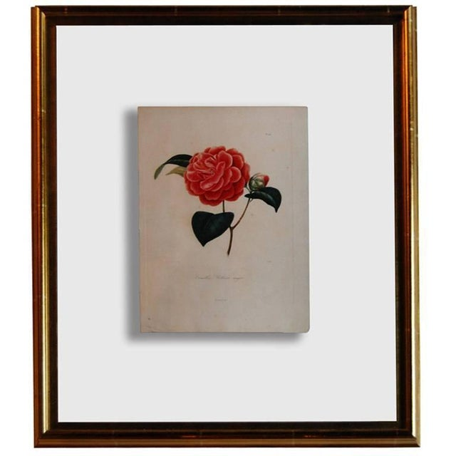 Four j.j. Jung Camellias Pressed Between Glass For Sale - Image 9 of 9