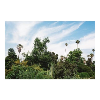 """Los Angeles Flora"" Original Framed Photograph"