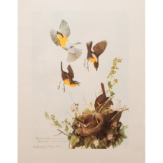 1966 Cottage Lithograph of Yellow-Breasted Chat by John James Audubon