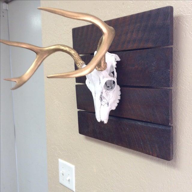 Deer Skull on Reclaimed Wood - Image 4 of 5