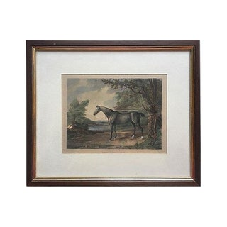 "19th C. ""Race Horse"" Aquatint Etching For Sale"