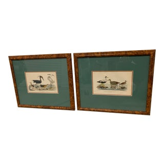 w.h. Lizars Lithograph Framed of Water Fowl - A Pair For Sale