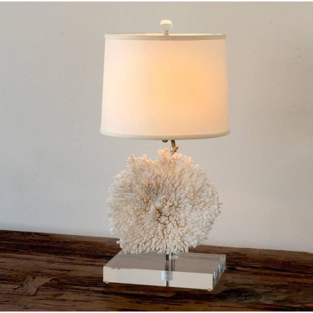 Distinguished pair of coral table lamps on lucite base decaso pair of coral table lamps on lucite base image 5 of 11 mozeypictures Images