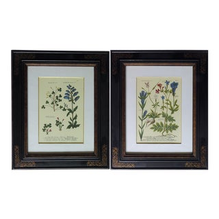 Trowbridge Gallery Art Frames With Botanical Prints - a Pair For Sale