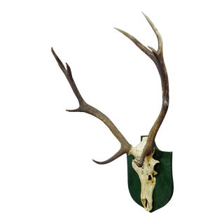 Vintage Black Forest Deer Trophy From Salem - Germany, Altenau 1956 For Sale