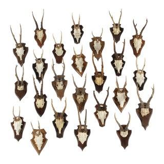 Vintage German Roe Deer Antlers, Set of 24
