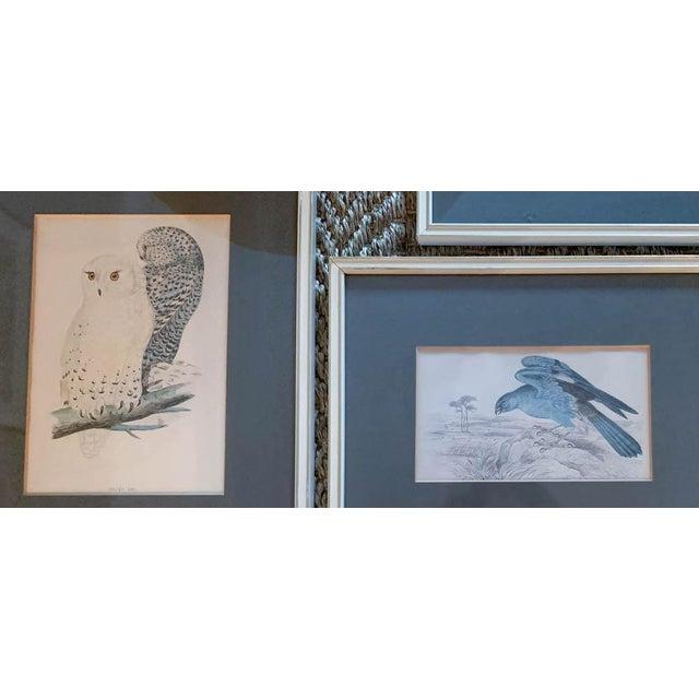 Set of 6 1840's Bird Engravings - Framed For Sale In New York - Image 6 of 11
