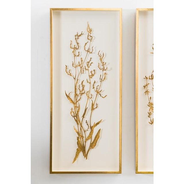 Sophie Coryndon, Illuminated Herbarium Triptych, Uk For Sale In New York - Image 6 of 9