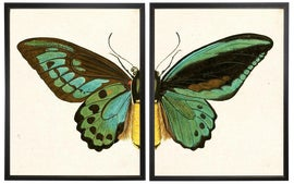 Image of Giclée Reproduction Prints