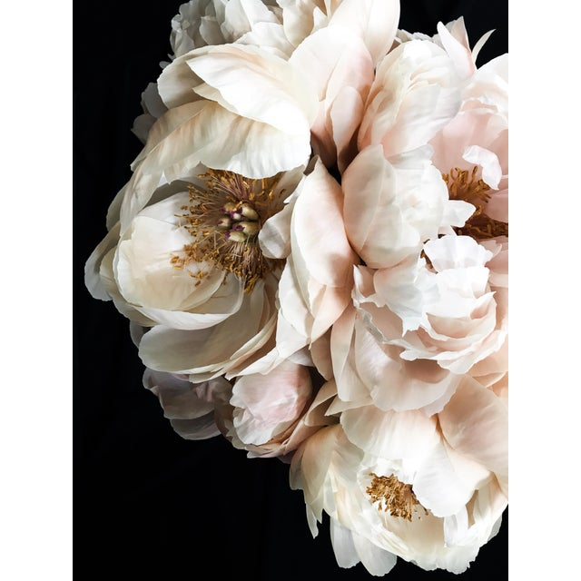Peony 62 Photographic print by California based photographer Christina Fluegge. Paper print on Hahnemuhle Photo Rag Paper....