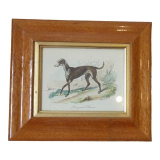 19th Century Antique Great Dane Maple Framed Print For Sale