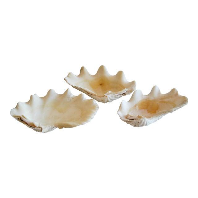 Antique Nautical Seashells Clamshells - Set of 3 - Image 1 of 10
