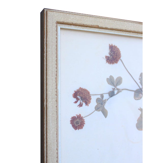 Framed Herbarium Plant Specimens From 1932 - Set of 20 For Sale In Los Angeles - Image 6 of 8