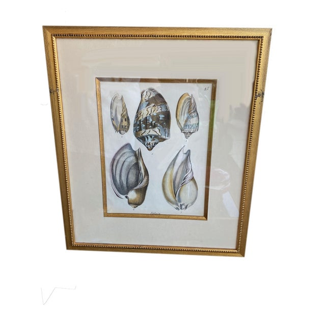 Antique Veluta Shell Engraving in Gilt Frame For Sale In Dallas - Image 6 of 6