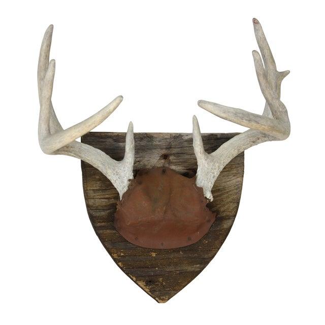 Vintage Rustic Deer Mount For Sale