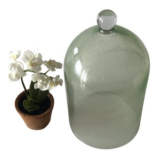 Vintage Green Terrarium Dome With Silk White Flowers For Sale