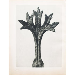 1935 Karl Blossfeldt Photogravure N31-32 For Sale