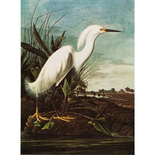 1960s Cottage Style Lithograph of a Great Snowy Heron by John James Audubon For Sale