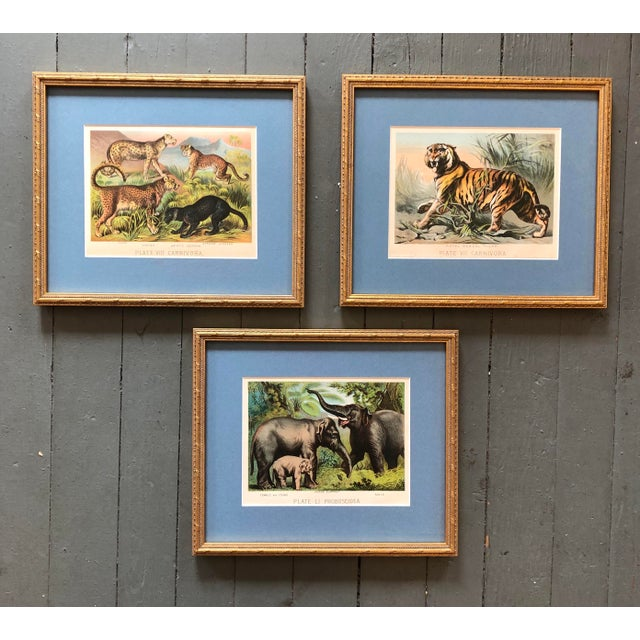 Gallery Wall Collection 3 Antique Framed Set of Chromolithographs Prints Jungle Themed (Cats & Elephants) For Sale In Philadelphia - Image 6 of 6