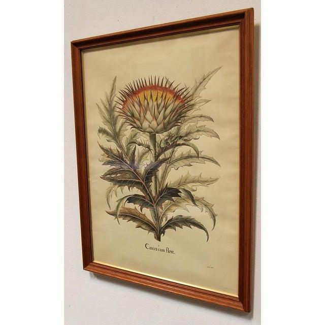 """Cinera Cum Flore"" Hand-Tinted Botanical Print - Image 7 of 8"
