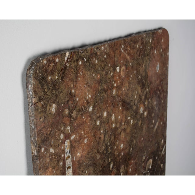 A fossil stone marble slab with rough cut edges and rounded corners. Beautiful warm greyish brown color with red tones....