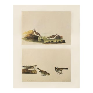 1966 Little Sandpiper & Lapland Longspur by John James Audubon For Sale