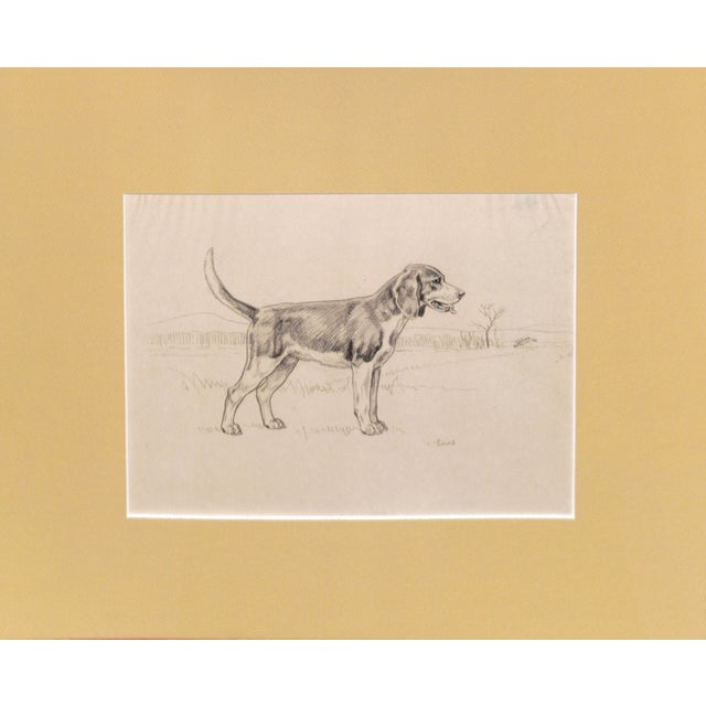 Beagle, Pencil Drawing by Charles Liedl - Image 3 of 3