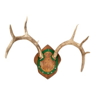 Antique Mounted Mule Deer Antler Trophy For Sale