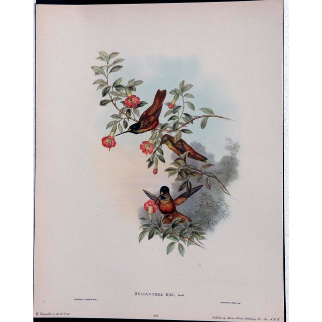 1940s John Gould Hummingbird Lithographs - Set of 6 (Marked Down to $35 Until September 15th) - Image 9 of 11